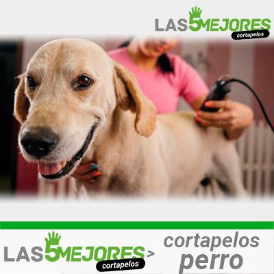 Mejores cortapelos para perro